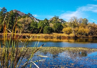 Flora Fishing: 5 Tips for Angling Aquatic Plants