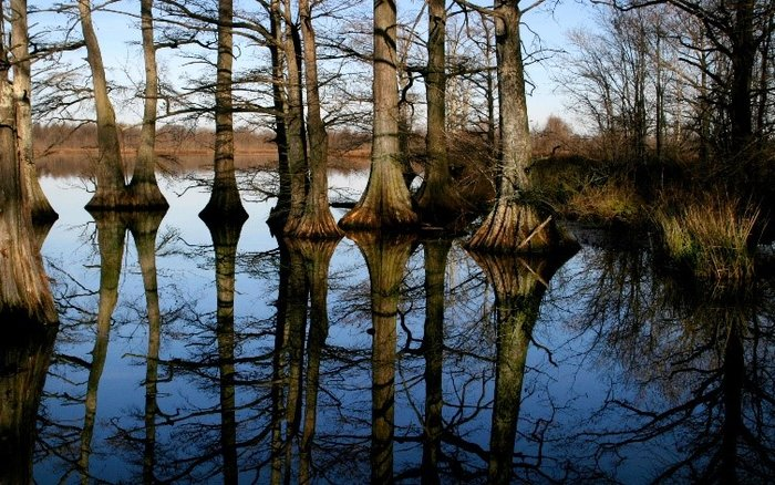 Reelfoot Lake, Tennessee: An Earthquake Turned Natural Wonder