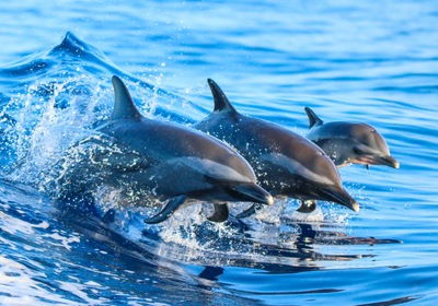 Learn to Fish Like a Dolphin on National Dolphin Day