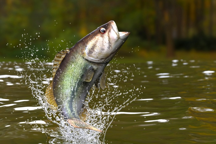 5 Tips for Lucky Largemouth Fishing
